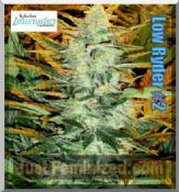 low ryder # 2 where to buy auto cannabis seeds online uk